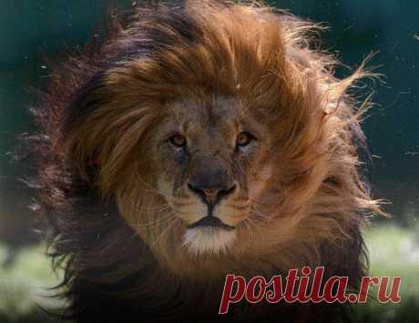 В мире животных | ВКонтакте