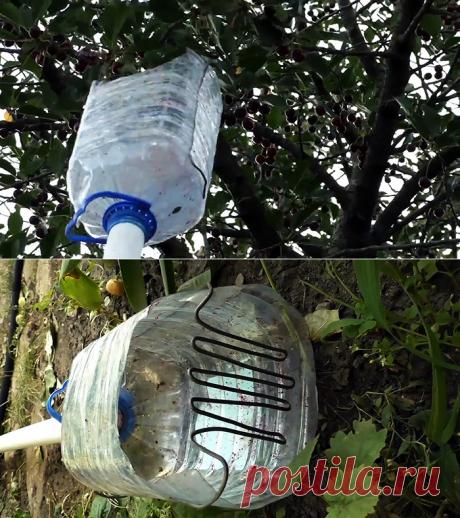 Хитрый сборщик вишни из ПЭТ бутылки за 5 минту