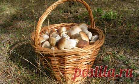 Как не спутать съедобные грибы с ядовитыми? Этот пост будет полезен как новичкам, так и бывалым грибникам. Даже если вы не отправляетесь в лес за грибами, а покупаете их в магазине или на рынке, то не плохо бы было и их проверить. Как это сделать? Придётся запомнить несколько отличий...