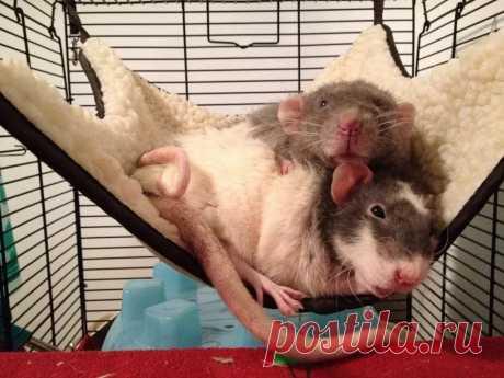 комбинезон для крысы крючком: 8 тыс изображений найдено в Яндекс.Картинках