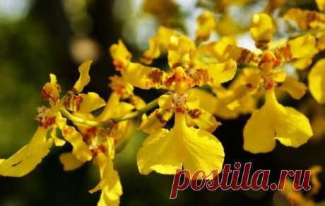 5 главных вопросов и ответов по уходу за орхидеями в комнатных условиях. Фото — Ботаничка.ru