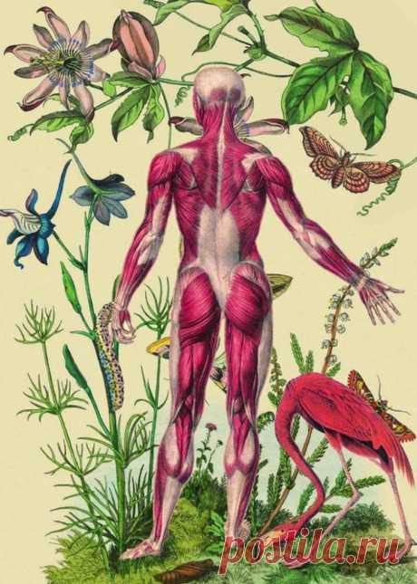 Какие болезни проявляются на коже / Будьте здоровы