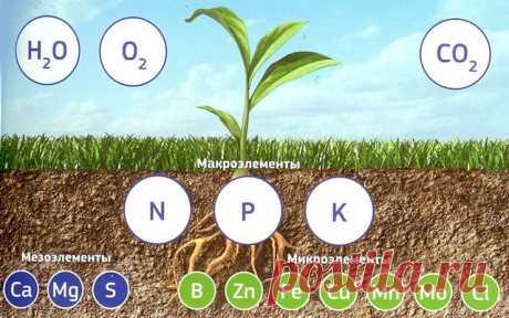 Удобрения (полный обзор от А до Я): виды, вещества, принципы действия и применения, выбор, наименования.