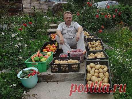 4 вида подкормок Игоря Лядова..