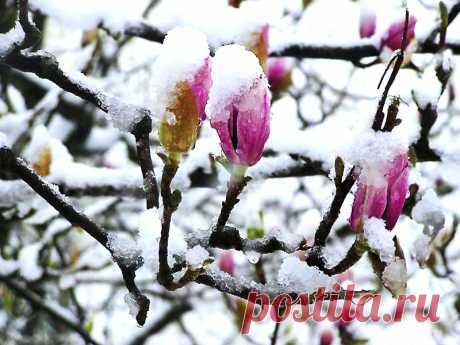 Нет, это не апрель с ума сошёл... (Ирина Самарина-Лабиринт) / Стихи.ру
