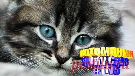 Вам нравится смотреть смешные видео про котов? Тогда мы уверены, Вам понравится наше видео 😍. Также на котомании Вас ждут: видео кот,видео кота,видео коте,видео котов,видео кошек,видео кошка,видео кошки,видео о котах, видео про кота, видео смешные, для котов видео, коты 2020, кошка видео смешное, кошку, приколы о кошках видео, про кошек, про смешно кошек, смешно кошки, смешные видео про животных, смешные кошки видео