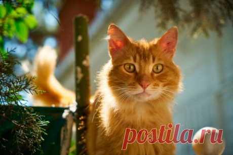 Как коты продемонстрировали хозяйке свой интеллект | Краше Всех