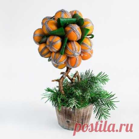 Своими руками: Мандариновое дерево
