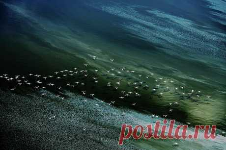 White Birds, Blue And Green Water Photograph by Hao Jiang