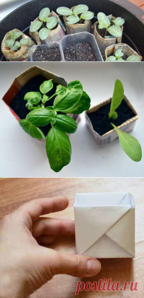 Бумажные стаканчики для выращивания рассады своими руками