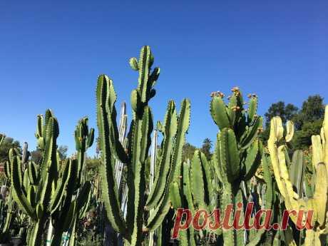 Картинки кактуса (37 фото) ⭐ Забавник