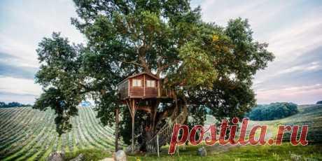 Молодая супружеская пара сбежала из шумного американского мегаполиса в Коста-Рику, чтобы построить этот многоуровневый дом мечты на дереве. Теперь их соседи – экзотические птицы и обезьяны