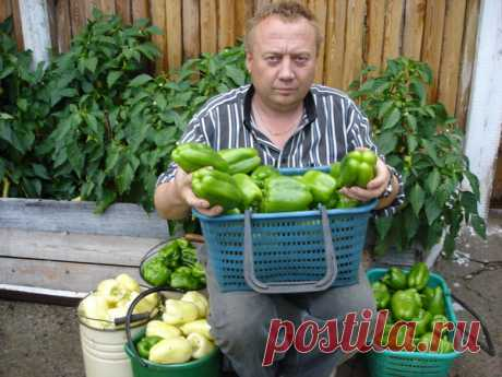 Удивительные урожайные грядки Игоря Лядова · Хроники Процветании