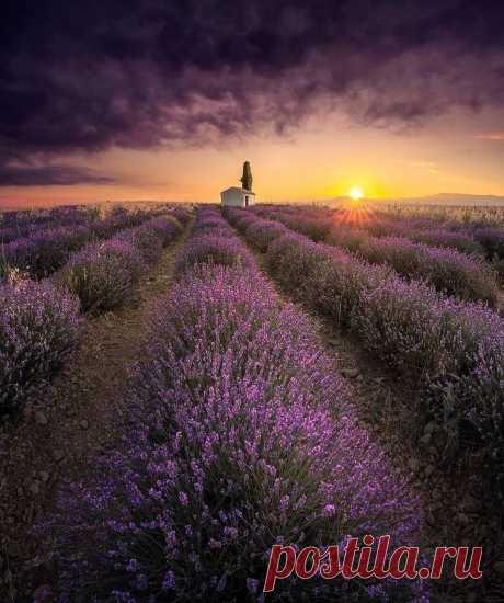 «Восход солнца над Провансом 📸 İlhan Eroğlu #франция #поле_цветов #лаванда #природа #пейзаж #солнце #Landscapes #Purple_palette #Fotografia» — карточка пользователя Александр Б. в Яндекс.Коллекциях