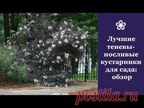 ❀ Лучшие теневыносливые кустарники для сада: обзор