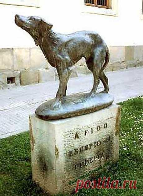 Итальянский рабочий Карло Сириане подобрал как-то маленького щенка черно-белой масти. Подросший пес стал любимцем всей семьи, а хозяина ежедневно сопровождал утром и встречал вечером на автобусной остановке. Так и прозвали его — Фидо, что означает «верный». Но однажды после бомбёжки (30 декабря 1943 года) знакомого автобуса долго не было. Затем пришёл другой незнакомый. И не все жители посёлка вернулись с ним. 14 лет каждый вечер приходил Фидо к остановке и ждал.О верности и преданности Фидо узн