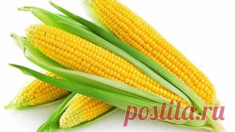 Кукурудза, тингириця, кенгериця: що приготувати і як зберегти золото літа Якщо у вас кукурудза асоціюється тільки з вареним стручком, алюмінієвою бляшанкою чи поп-корном – то вам точно сюди. Редакція Прозаходу також дуже любить кукурудзу, яку споживає чи не вся зем…