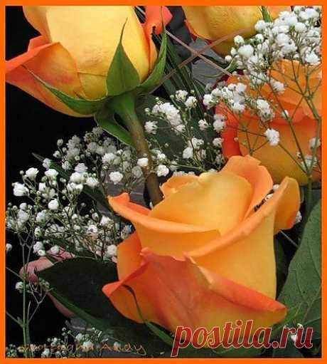 красота....розы