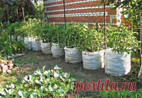 Выращивание огурцов в мешках - видео