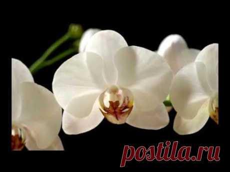 МK по полимерной глине: Орхидея / Polymer clay orchid tutorial - YouTube