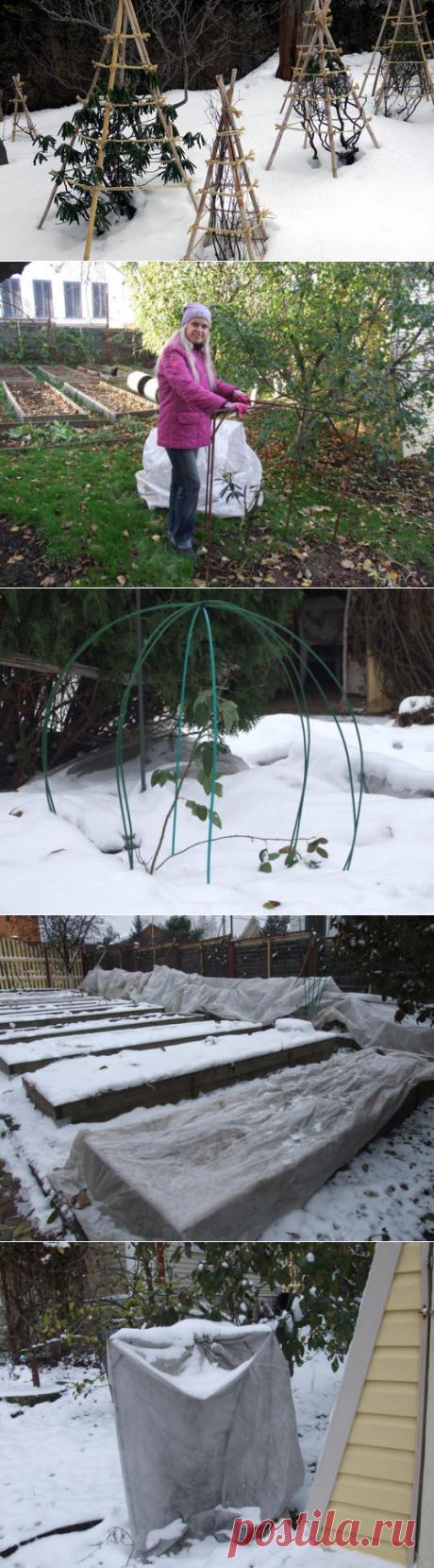 Укрытие растений: ошибки при подготовке сада к зиме