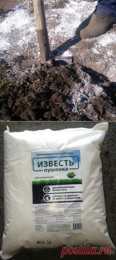 Зачем и как правильно известковать почву. | Klumba-plus.ru | Яндекс Дзен