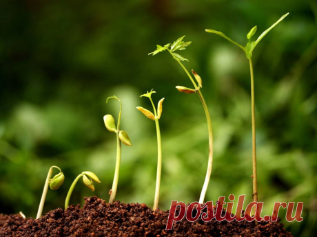 The best growth factors: application and characteristics