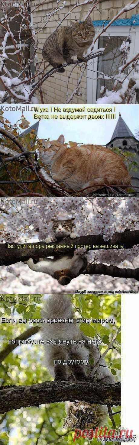 Грачи прилетели | KotoMail.ru