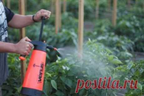 Чем опрыскать томаты в июне и июле 🚩 Сад и огород
