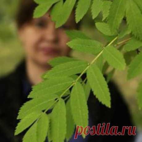 Людмила Ашмарина