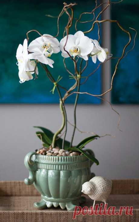 10 идей, как украсить дом горшечными орхидеями, советы по уходу . Расскажем, как использовать домашние орхидеи для украшения интерьера Существует более 22 тысяч видов орхидей, но только несколько десятков из них могут произрастать в домашних условиях. Да и те гибриды. Орхидея — эпифит. То есть она не растёт в земле. Для выращивания этого растения понадобится светлый, а лучше прозрачный горшок.