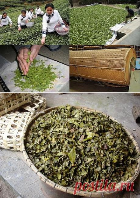 Что такое ферментация чая. Подробное описание процесса создания чая.