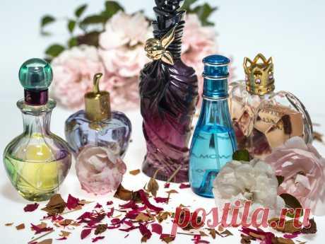 Как понять, что в интернет-магазине продается поддельная парфюмерия: признаки, которые должны насторожить | ПолезНЯШКА | Яндекс Дзен