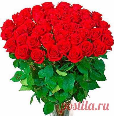 ...букет роз