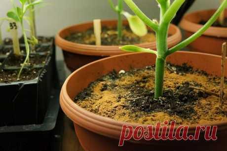 Корица для комнатных растений — Полезные советы