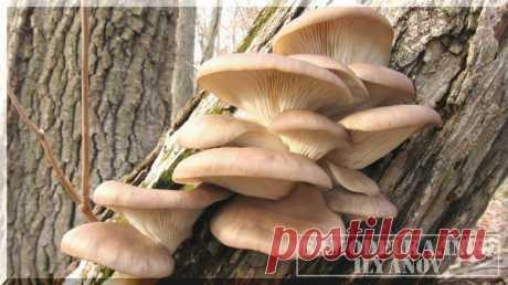 Сделай сам: система автоматического полива для выращивания грибов