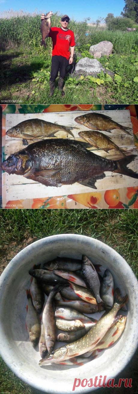 Лучшая рыбалка на Селигере