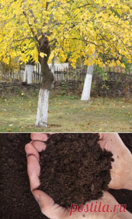 Осенняя подкормка сада | Садовод (Усадьба)