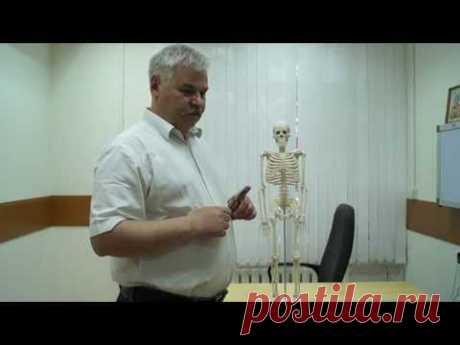 БОЛИ В СЕРДЦЕ, БОЛИ В ГРУДИ (разъяснения о грудных болях проводит врача-невролога)