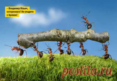 Оказывается, муравьи вовсе не любят работать, выяснили ученые | MAXIMonline.ru | Яндекс Дзен