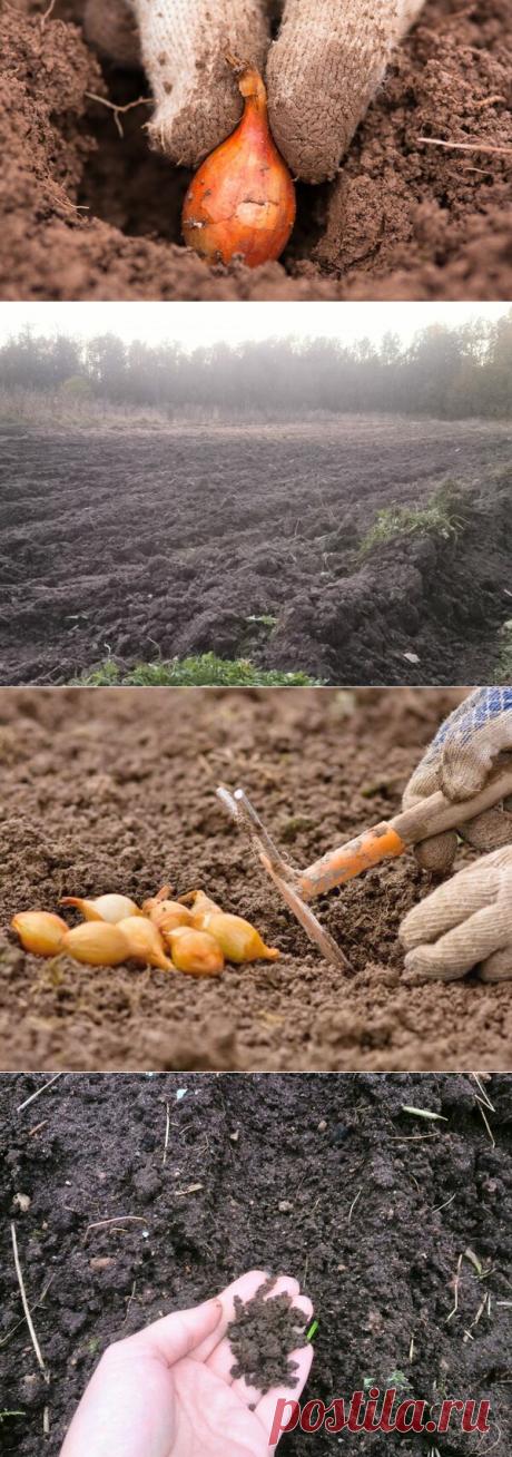 Когда сажать лук севок весной в Подмосковье. Сверяем сроки | Блоги о даче, рецептах, рыбалке #Садидача, #Посадкарастений, #Овощи, #Теплицы  Лук севок я выращиваю каждый год. Сажаю разные сорта, чтобы вырастить крупный и здоровый лук. Для получения хорошего урожая нужно сажать лук вовремя и в качественную почву. Расскажу подробнее, как и когда я сажаю лук севок.