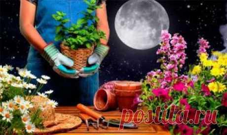 Посадка и пересадка цветов по лунному календарю в 2019 году Для максимально эффектного и длительного цветения различных растений рекомендуется их выращивать по природным законам. В лунном календаре цветовода отражены основные этапы роста и развития. Посадка и ...