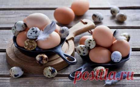 Сохраняем мясо, рыбу и яйца свежими — Полезные советы