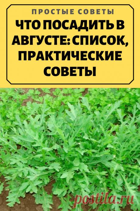ЧТО ПОСАДИТЬ В АВГУСТЕ: СПИСОК, ПРАКТИЧЕСКИЕ СОВЕТЫ.Имея свой земельный участок, хочется получать свежую зелень и овощи до самых заморозков. И это возможно, если знать, что и как правильно посадить и посеять в августе.
