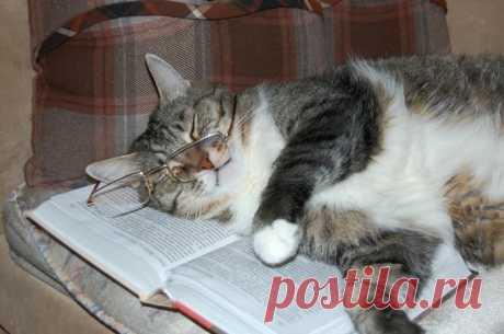 Какой же кот-учённый без очков?