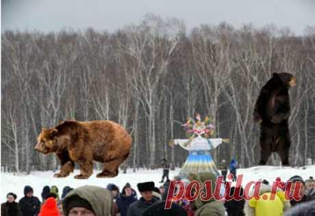 Медведи-двоедушники