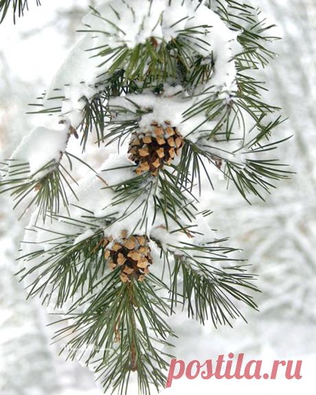 Снежная нежность, Нежная снежность, Тонкая нить серебра… Белые хлопья Правдоподобья Волнами лягут ковра… Хрупкие грани Между мирами, Кубики битого льда, Тюль с бахромою, Синь с белизною, И за звездою — звезда… Нежная снежность. Снежная нежность Кружится танцем с небес, Целая вечность, Чистосердечность Зимнего царства чудес…  © Марина Бойкова
