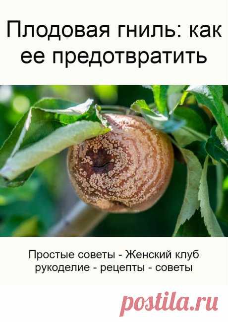 Плодовая гниль: как ее предотвратить