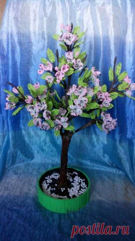 Яблоньки в цвету