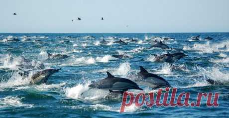 К Крымскому мосту приплыли более тысячи дельфинов  Строители Крымского моста похвалились ростом числа дельфинов      Количество дельфинов в Керченском проливе резко увеличилось в связи со строительством моста. Об этом в понедельник, 27 февраля, сообщ…